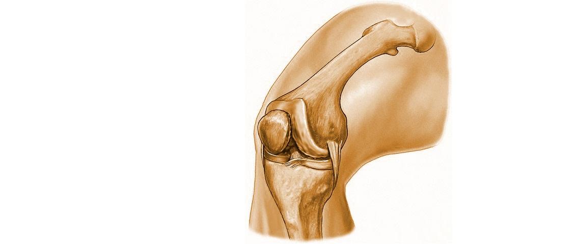 Строение коленного сустава человека его болезни