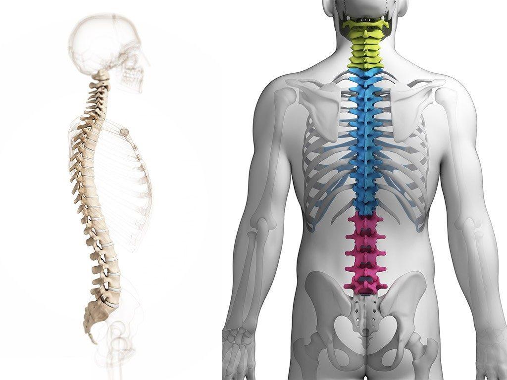 Что такое дегенеративно дистрофические изменения грудного отдела позвоночника Остеохондроз грудного отдела