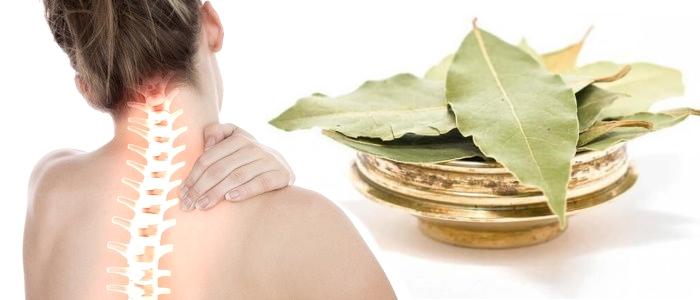 Лечение лавровым листом остеохондроза